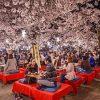 Mách cho bạn những điểm ngắm hoa mùa xuân đẹp nhất ở Kyoto